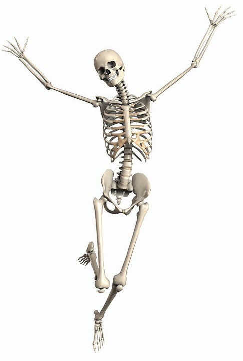 Bones - Natural Treatments And Remedies - the natural health dictionary - thenaturalhealthdictionary.com skeleton-2504341_960_720 3