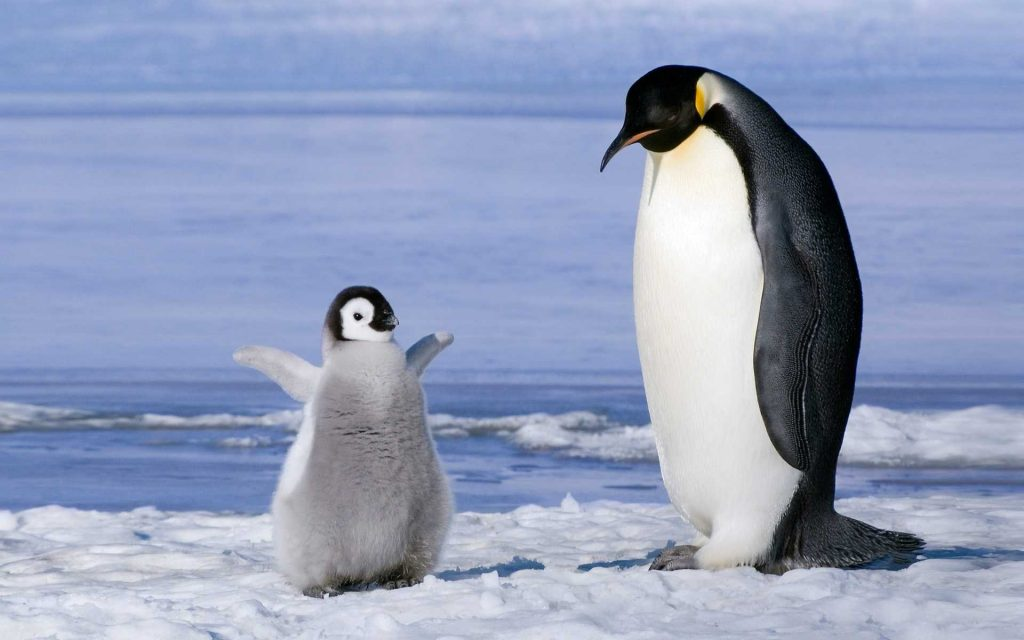 Colds - Cold - Trattamenti è Rimedi naturali - thenaturalhealthdictionary.com - u dizziunariu di a salute naturale - Antarctic-penguins_1920x1200 2