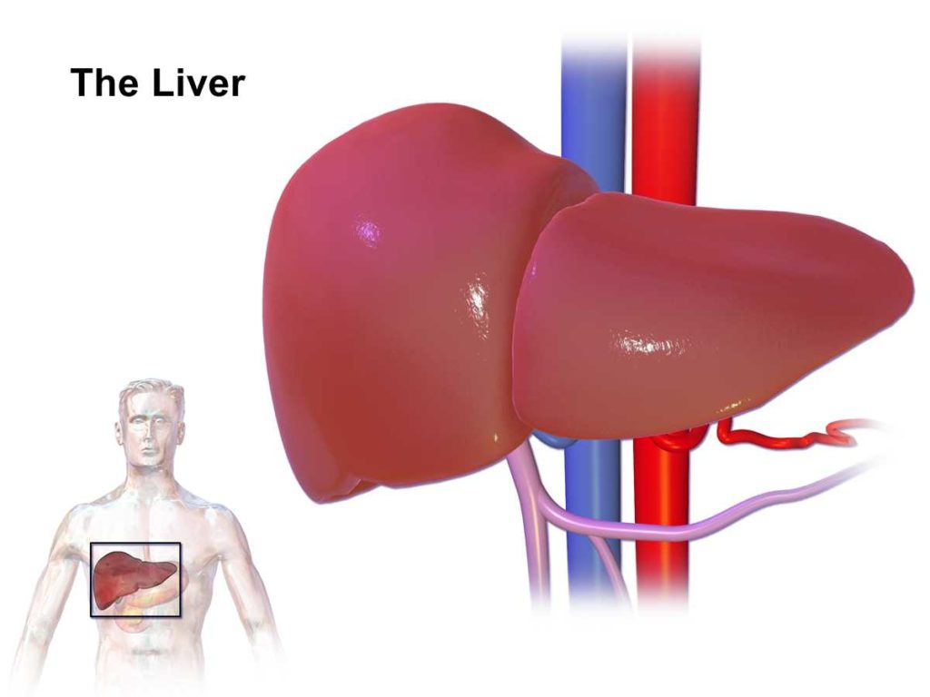 liver damage symptoms - the natural health dictionary - thenaturalhealthdictionary.com