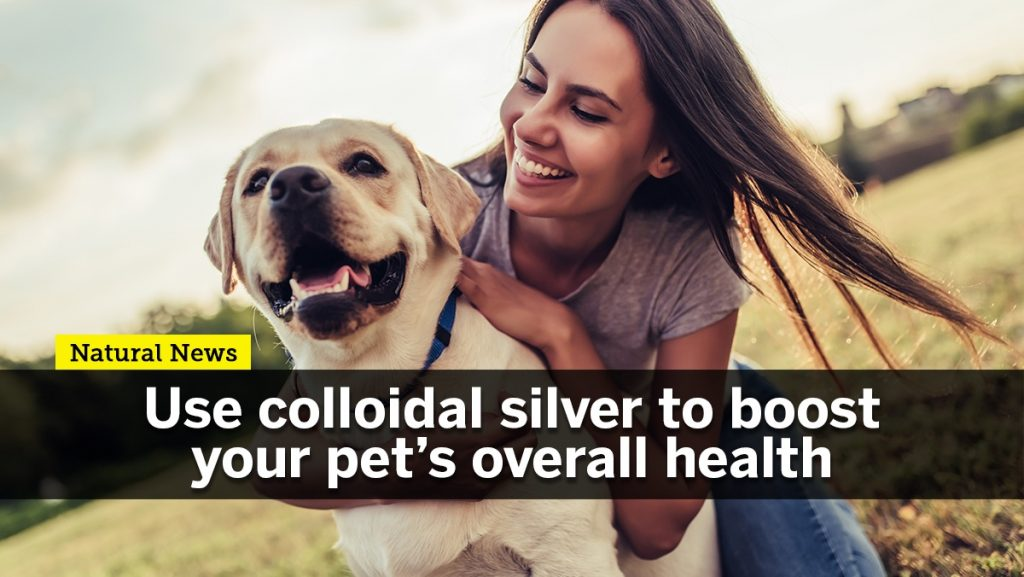 argento colloidale per a salute di animali domestichi - feature-graphic-colloidal-silver-Pets.jpg