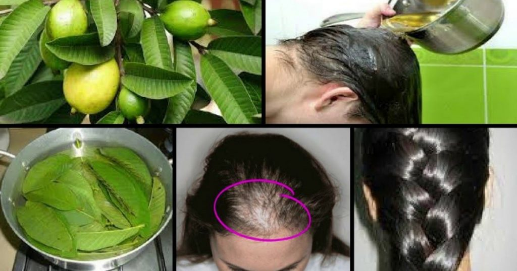 Stop Hair Loss And Make It Grow Faster With Guava Leaves-The N H Dictionary-thenaturalhealthdictionary.com