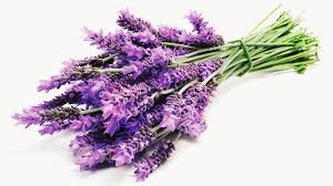 Lavanda - thenaturalhealthdictionary.com